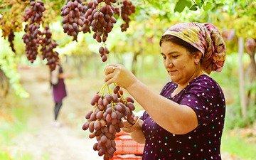 женщина и виноград